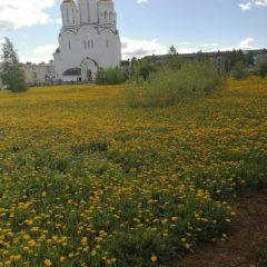 В Серовской епархии подвели итоги фотоконкурса «Весть Воскресения»